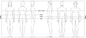 main body measurements